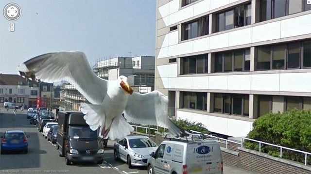 funny animals on google streeview