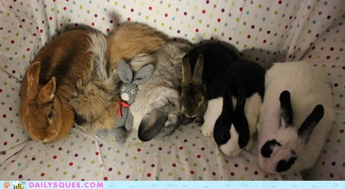 bunny family happy bunday pet rabbit reader squee - 6511170560