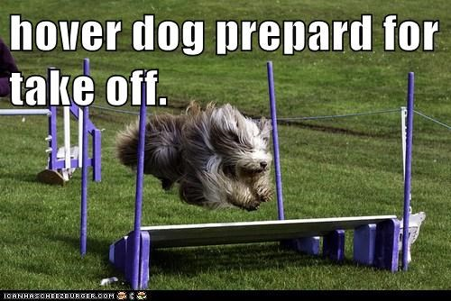 agility dogs hover dog jumping old english sheepdog take off - 6511395328