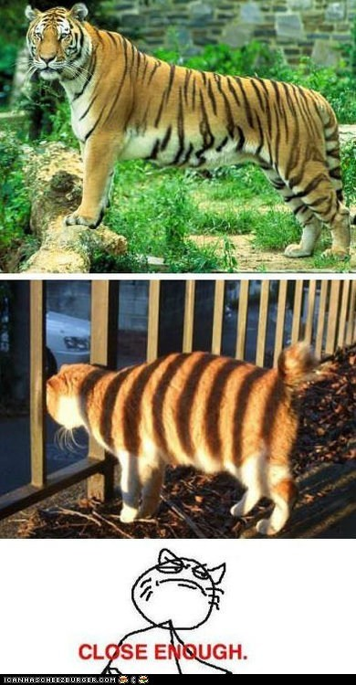 Cats Close Enough fences Memes multipanel shadows tigers - 6511455488