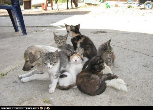Cats dogs goggies r owr friends Interspecies Love on top pile - 6511584256
