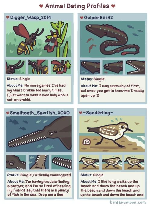 nature science animals web comics - 6511621