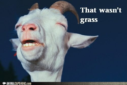captions,goat,grass,happy,high,stoned,weed