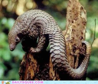 armor Pangolin scales tree whatsit wednesday