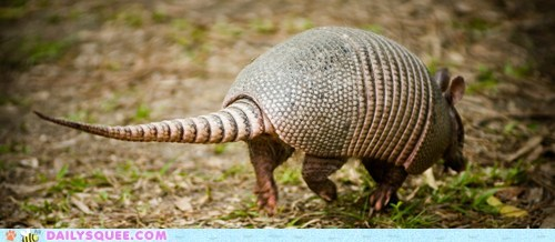 armadillo armor leathery rolling around squee spree