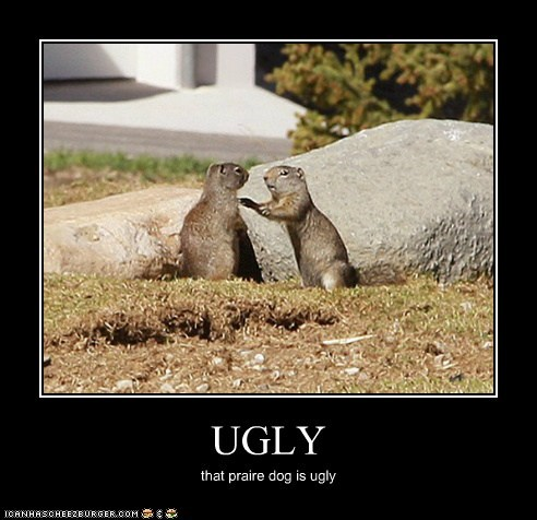 UGLY that praire dog is ugly