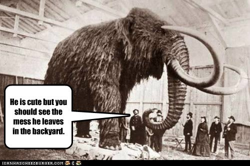 extinct,giant,mammoth,poops,specimen