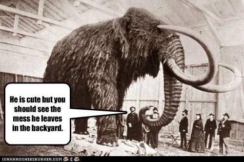 giant mammoth - 6512135424
