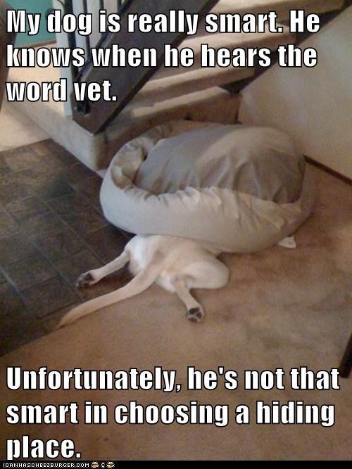 bed dumb hiding place lab smart vet - 6512209664