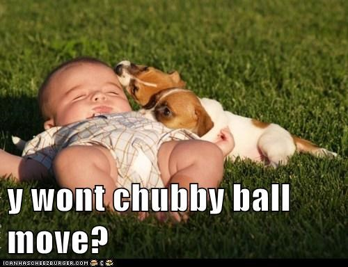 baby,ball,chubby baby,dogs,grass,puppies,what breed