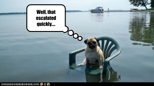 dogs,flood,lawn chair,pug,well that escalated quickly,what happens