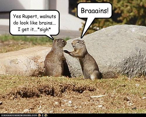 annoying brains squirrels zombie - 6512644352