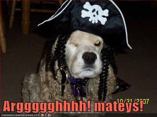 arrg costume dogs Pirate what breed - 6513004288