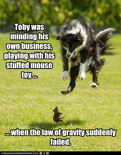 Toby was minding his own business, playing with his stuffed mouse toy ... ... when the law of gravity suddenly failed.