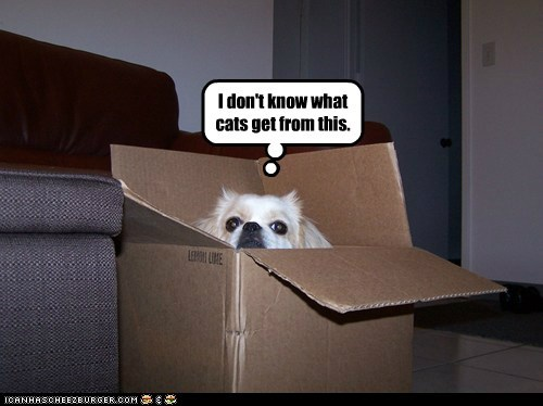 box,captions,cardboard,cat in a box,dogs,i-dont-get-it,shih tzu