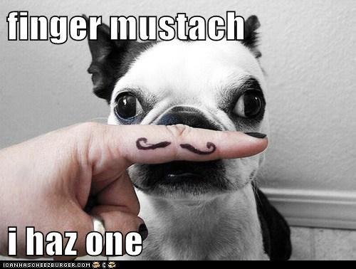 Cheezburger Image 6513525760
