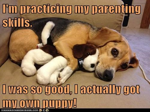 baby,beagle,couch,cuddles,dogs,good doggy,Parenting Skills,stuffed animal