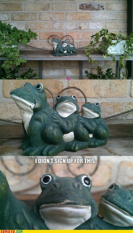 frog oh god why
