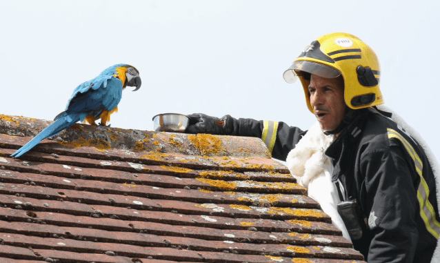firefighter curse parrot rescue - 6513669
