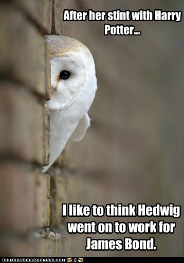 After her stint with Harry Potter... I like to think Hedwig went on to work for James Bond.