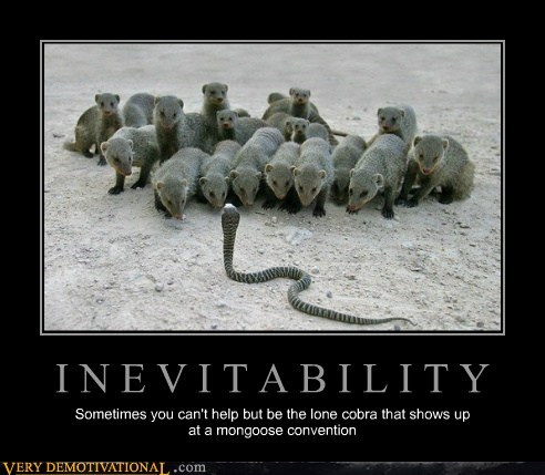 I N E V I T A B I L I T Y Sometimes you can't help but be the lone cobra that shows up at a mongoose convention