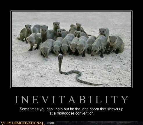 awesome cobra inevitability mongoose - 6513751040