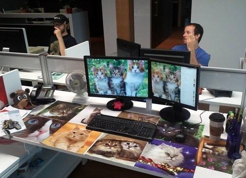 office pranks cubicle pranks Cats monday thru friday - 6513812224
