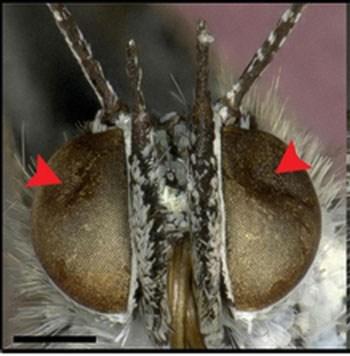 butterflies fukushima plant mutants mutation nuclear radiation - 6513908480
