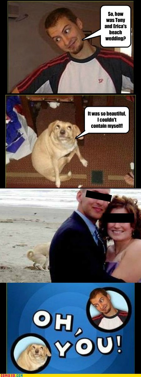 beach,dogs,dog poop,oh you,wedding