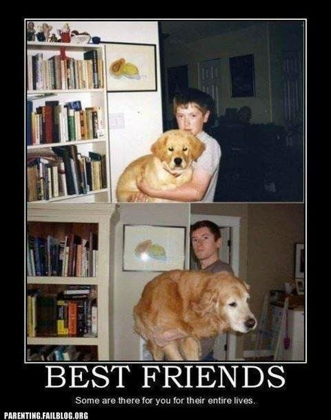 Before And After best friends dogs recreation