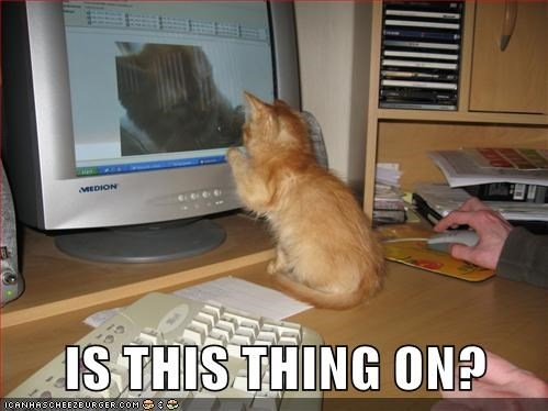 captions Cats computer is this thing on technology - 6514026752