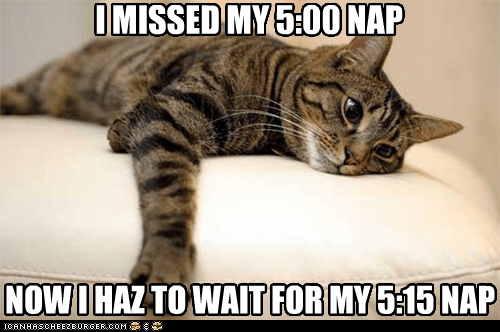 captions Cats First World Problems nap rest sigh - 6514030080