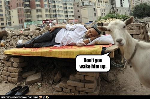 Cheezburger Image 6514040832