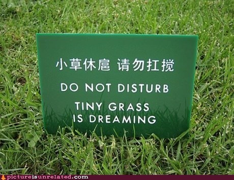 dreaming,engrish sign,grass,sleeping,wtf