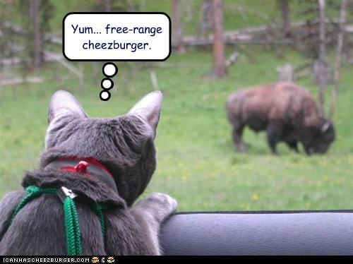 Cheezburger Image 6514270976