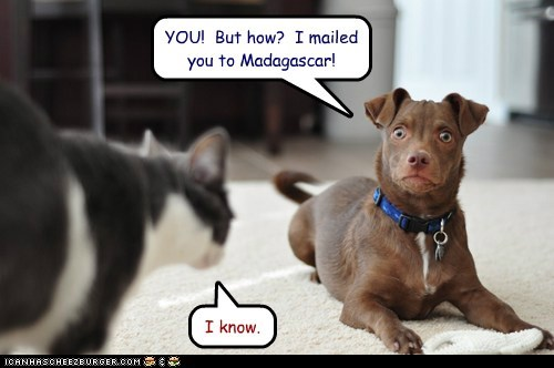 captions cat dogs madagascar mailed the cat shock surprise the cat came back what breed