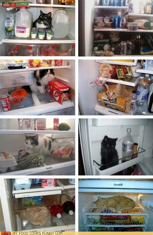 Cats cold food fridge fridges hot multipanel my food looks funny refrigerator refrigerators