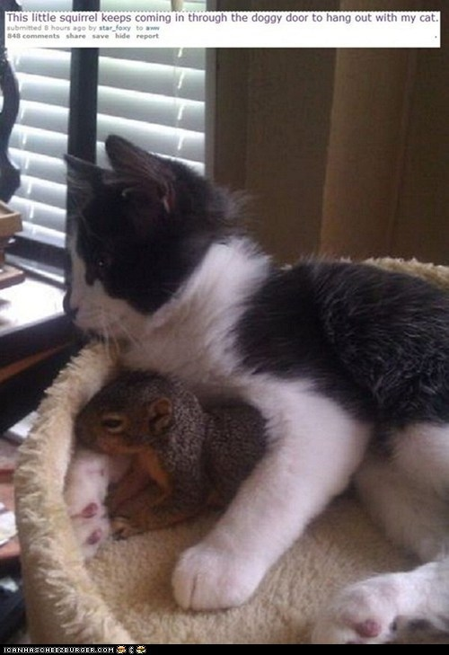 Cats,cuddling,Interspecies Love,nature,squirrels