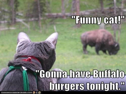 Cheezburger Image 6514515456