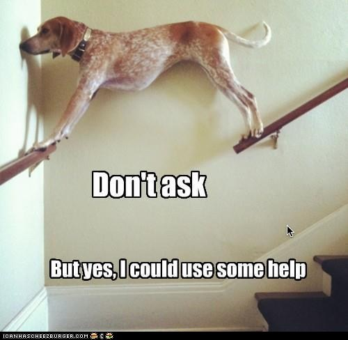 captions dogs dont-ask help railings stairs stuck - 6514520576