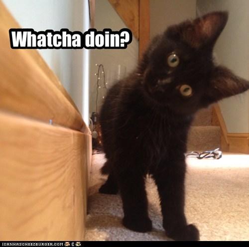 hello captions curious Cats - 6514574848