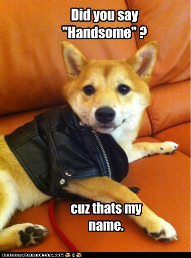 dogs handsome jacket thats-my-name what breed