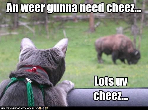 An weer gunna need cheez... Lots uv cheez...