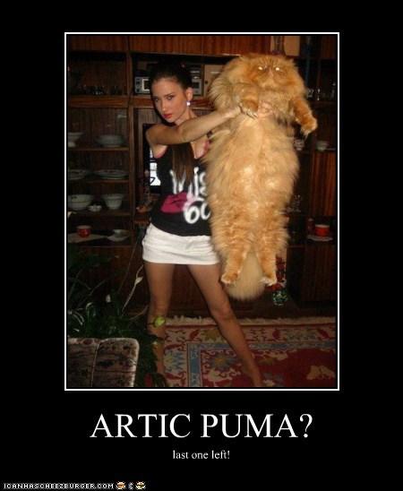 ARTIC PUMA?