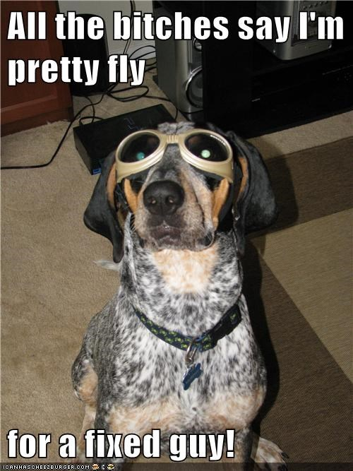cool dachshund dogs fixed fly goggles spayed - 6515619072