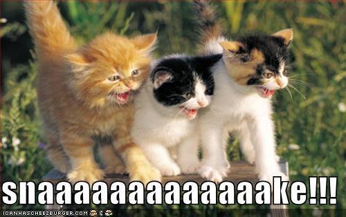 kitten lolcats lolkittehs scared snake - 651575040