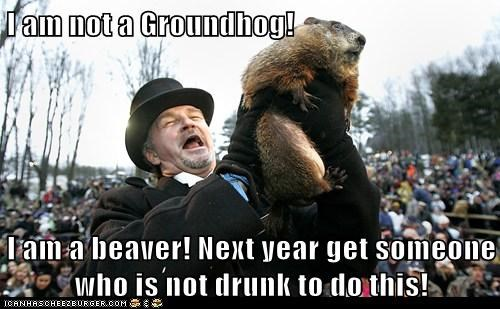 beaver,drunk,groundhog,groundhog day,mistake,next year,wrong