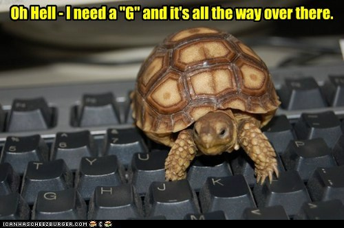 crap inconvenient keyboard slow small turtle typing - 6516291584