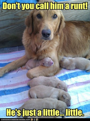 Babies,dogs,golden retriever,mommy,newborn,politically correct,puppies,runt