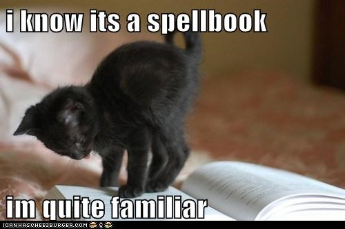 spells,witch,captions,book,Cats,magic